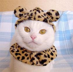 leopardcat.jpg