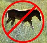 No pony for YOU!