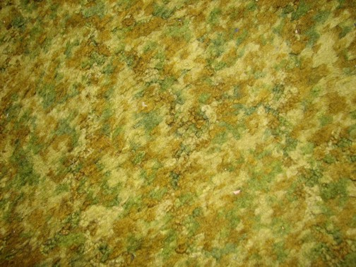 vomitcarpetsm.jpg forest floor green carpet vomit carpet
