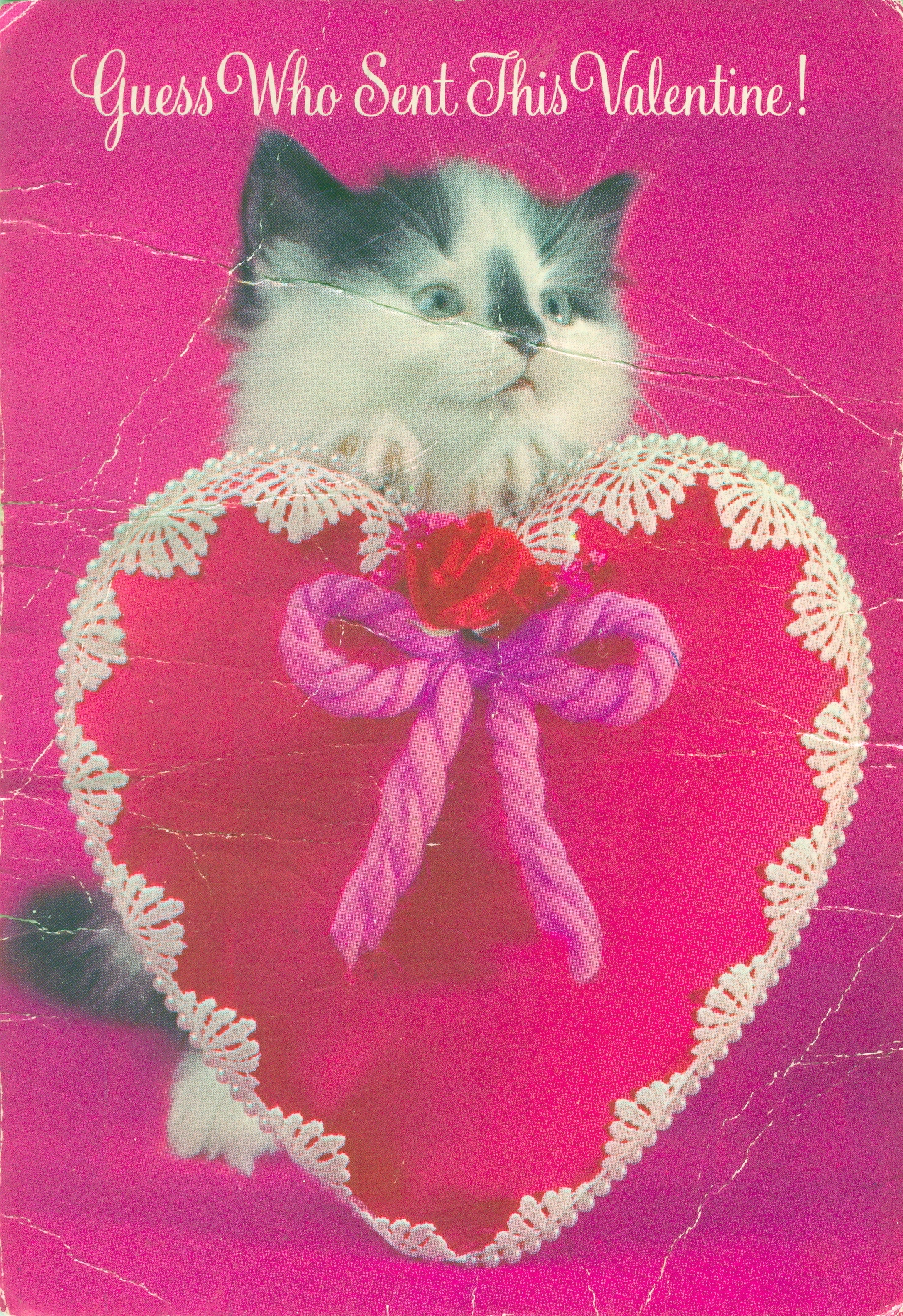 Sweet Kitty Valentine